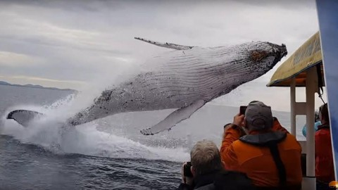 VIDEO: Whale Launches Out Of The Water During Boat Tour