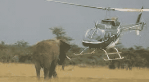 Elephant And A Helicopter Engage In An Intense Game Of Chicken