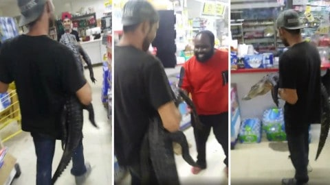 Man Who Took An Alligator On A Beer Run And Recorded It Gets Arrested