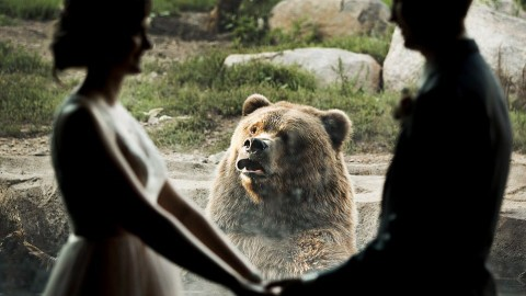 Bear Photobombs Couple's Wedding At The Zoo And Doesn't Look Happy About The Nuptials
