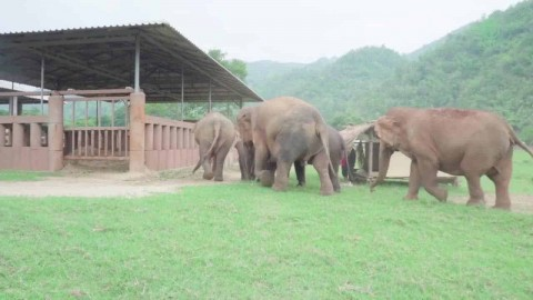 VIDEO: Entire Herd Of Elephants Rush Over To Greet A Rescued Baby Elephant