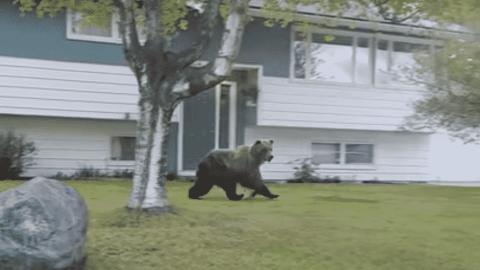 VIDEO: Family Spots Grizzly Bear Running Through A Neighborhood