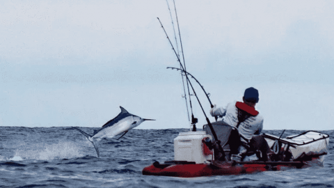 Watch Solo Kayaker Catch 450-Pound Black Marlin