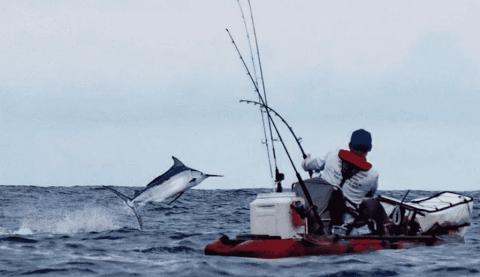Watch Solo Kayaker Catch 450-Pound Black Marlin