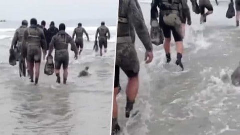 Adorable Baby Seal Tags Along With Navy SEALs During Beach Exercise