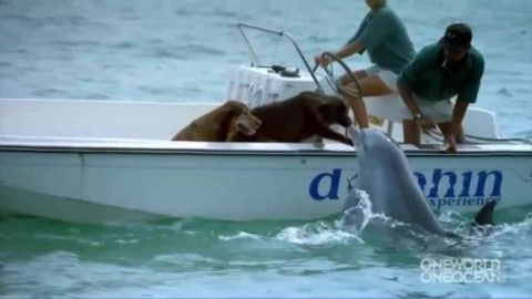 Dolphin Spots A Dog, Pops Out Of The Water And Gives It A Kiss