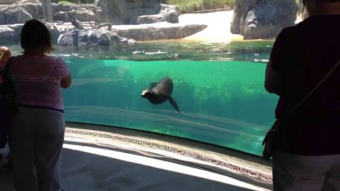 VIDEO: It's All Fun And Games For This Sea Lion Until A Little Girl Falls