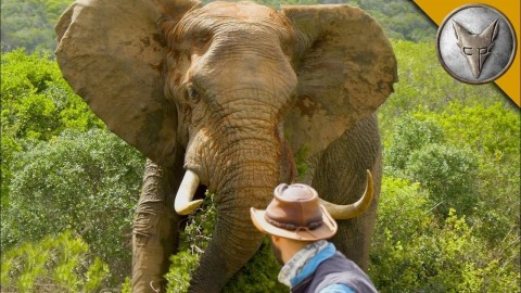 VIDEO: Brave Wilderness Gets Up Close And Personal With The Biggest Elephant We've Ever Seen
