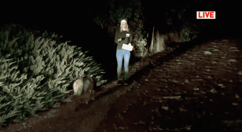 Reporter Mistakes Mountain Lion For A Dog On Air As It Walks Right By Her