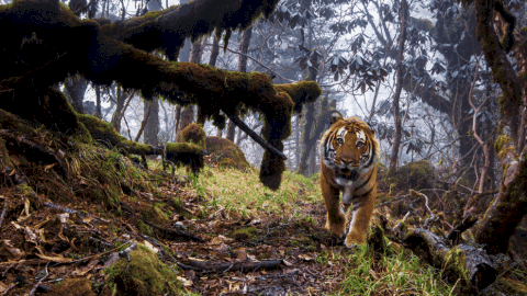 Wildlife Photographer of the Year Pictures Show That Nature Is Absolutely Incredible