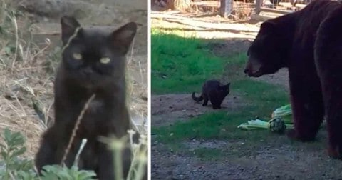 VIDEO: Feral Cat Becomes Best Friends With Black Bear After Wandering Into Its Exhibit