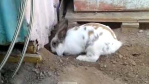 Watch Rabbit Dig A Hole To Help Save A Trapped Kitten