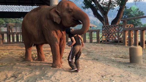 VIDEO: Elephant Is No Match For A Lullaby