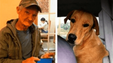 Man Gets Shot In The Back By His Dog While Sitting In His Truck