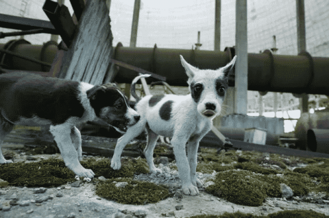There Are Hundreds Of Dogs And Puppies Living In Chernobyl That Can Be Adopted