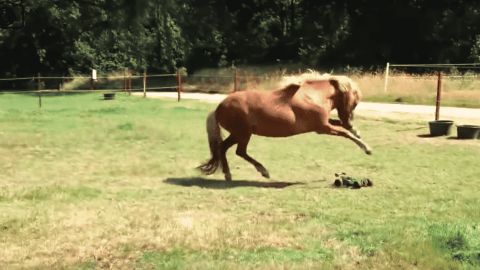 VIDEO: Horse Is Out To Seek And Destroy RC Cars