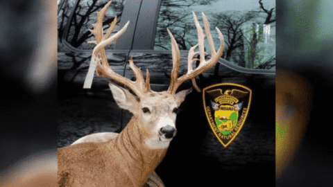 Man Poaches A Buck, Stuffs It In Freezer For A Year, Gets Caught Anyway