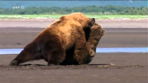 Watch Two Ticked Off Grizzly Bears Get Into A Serious Brawl