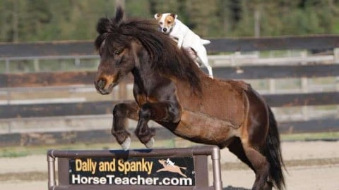 Cowgirl Dog: Horse-Riding Jack Russell Terrier Just Wants To Be On The Open Range