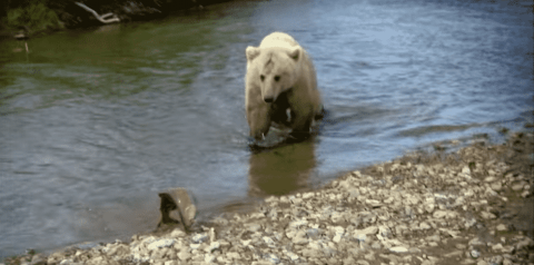 VIDEO: Fisherman's Catch Is Only His Until A Grizzly Decides It Wants It Instead