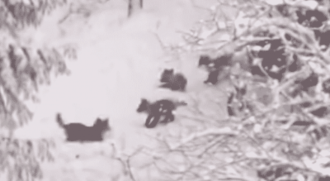 These Baby Foxes Know How To Make The Most Of A Snow Day
