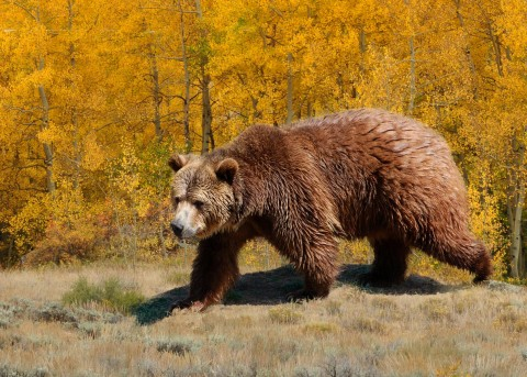Teen Fights Off A Bear With Bear Spray After It Pins Him To A Tree