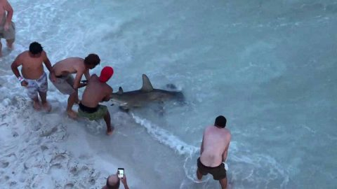 VIDEO: Beachgoers Remove Hook From Hammerhead Shark That Swam Up To Shore