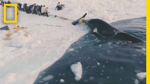 Traditional Whale Hunt Carries On A 1,000-Year-Old Tradition