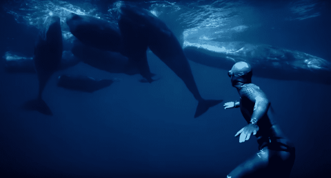 Free Diver Explores An Underwater World In Incredible Footage