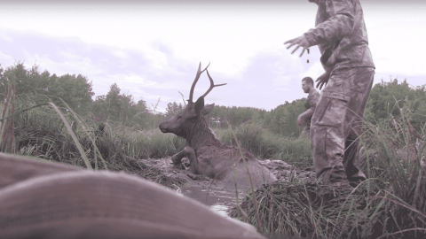 Watch Hunters Help A Trapped Elk Out Of A Mud Pit