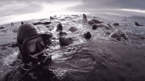 VIDEO: Sea Lions Surround Divers In Incredible Footage