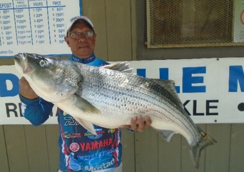 Del Valle Lake Lunker: Angler Catches A 30lb Striped Bass