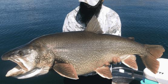 Massive Record Breaking Lake Trout