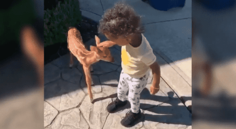 Fast Friends: Jarvis Landry's Daughter Befriends Baby Deer And Gives Plenty Of Pets