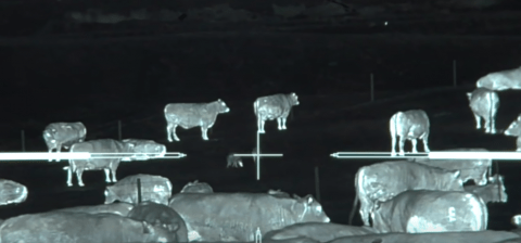 Thermal Scope Helps Down 45 Coyotes In Epic Footage