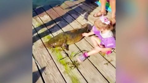 Kid Catches Fish With A Mini Pole That's Bigger Than She Is