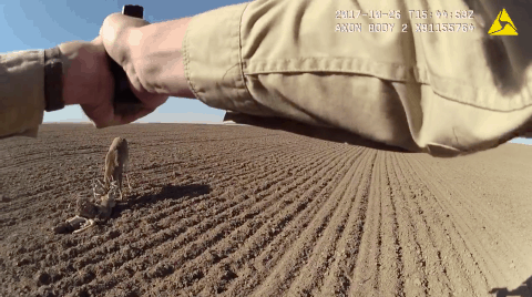 Unreal Footage: Game Warden Uses Glock To Frees Two Locked Bucks