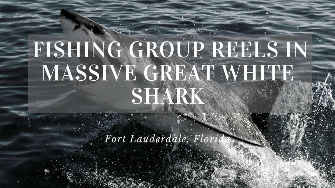 Giant Great White Shark Caught in Fort Lauderdale