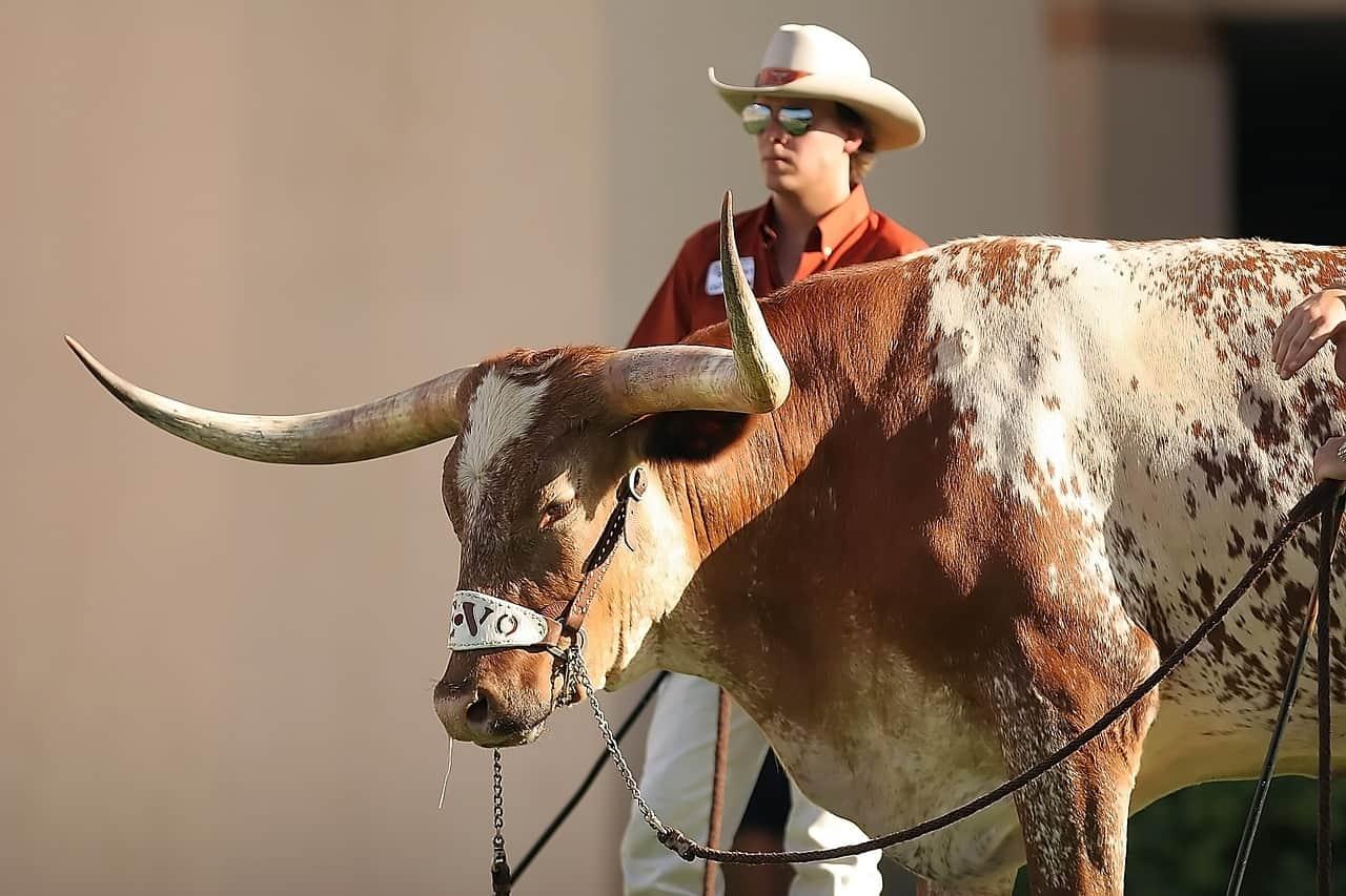 mascot, sports, texas